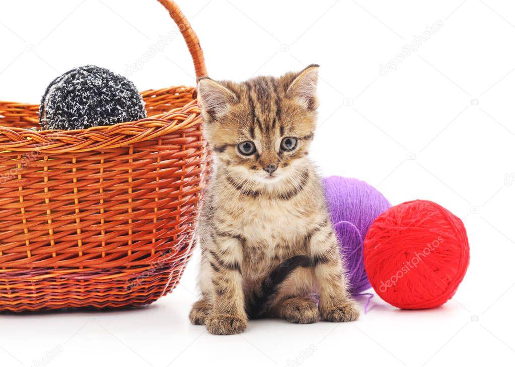 Kitten with balls of yarn.