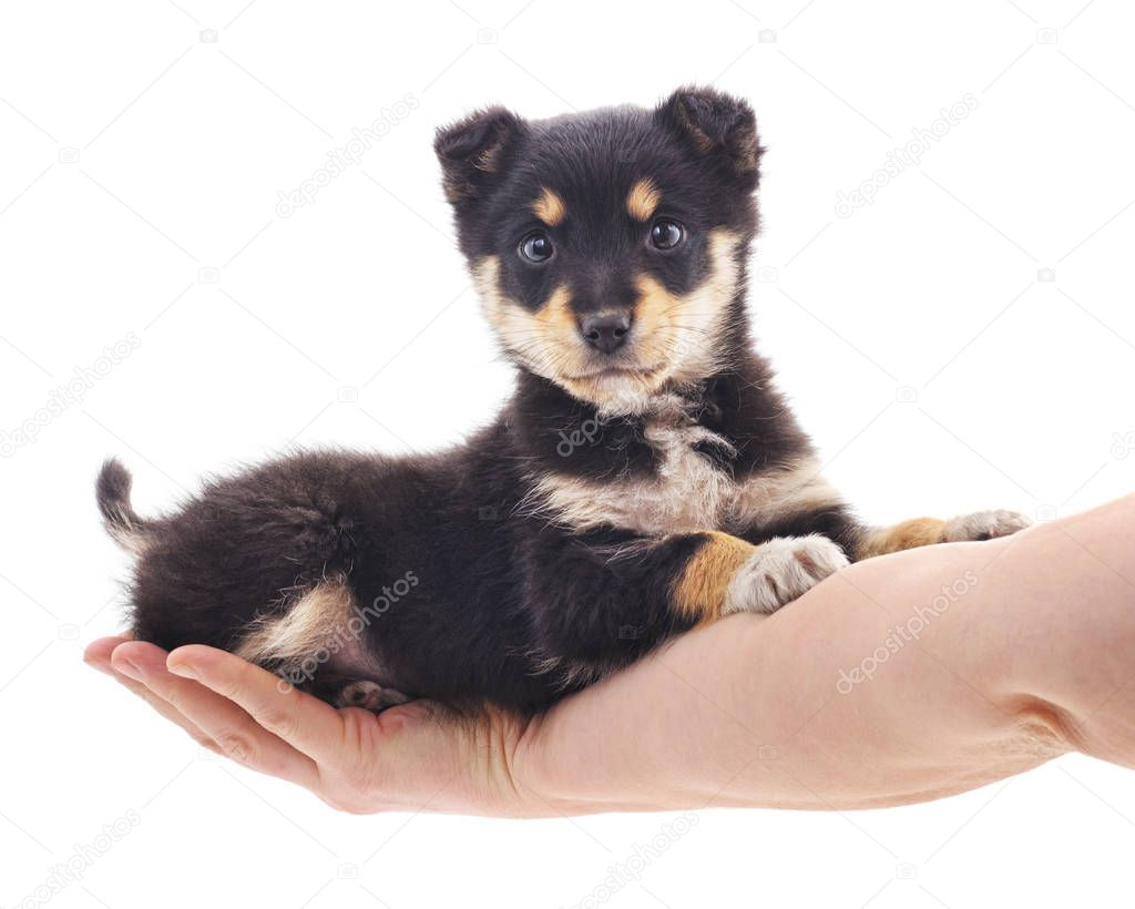 Puppy on the hand.