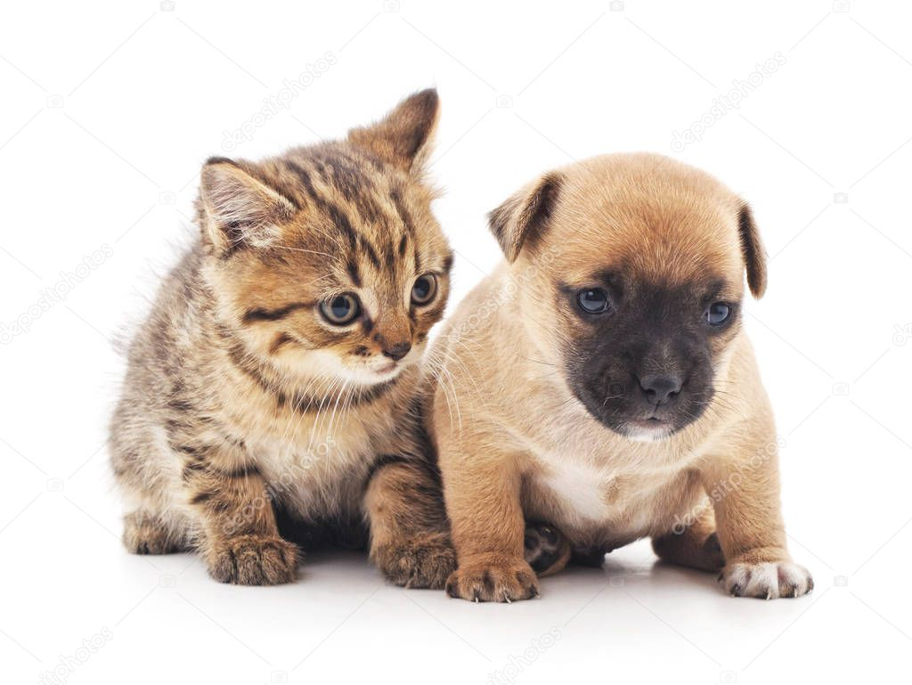 Kitten and puppy.