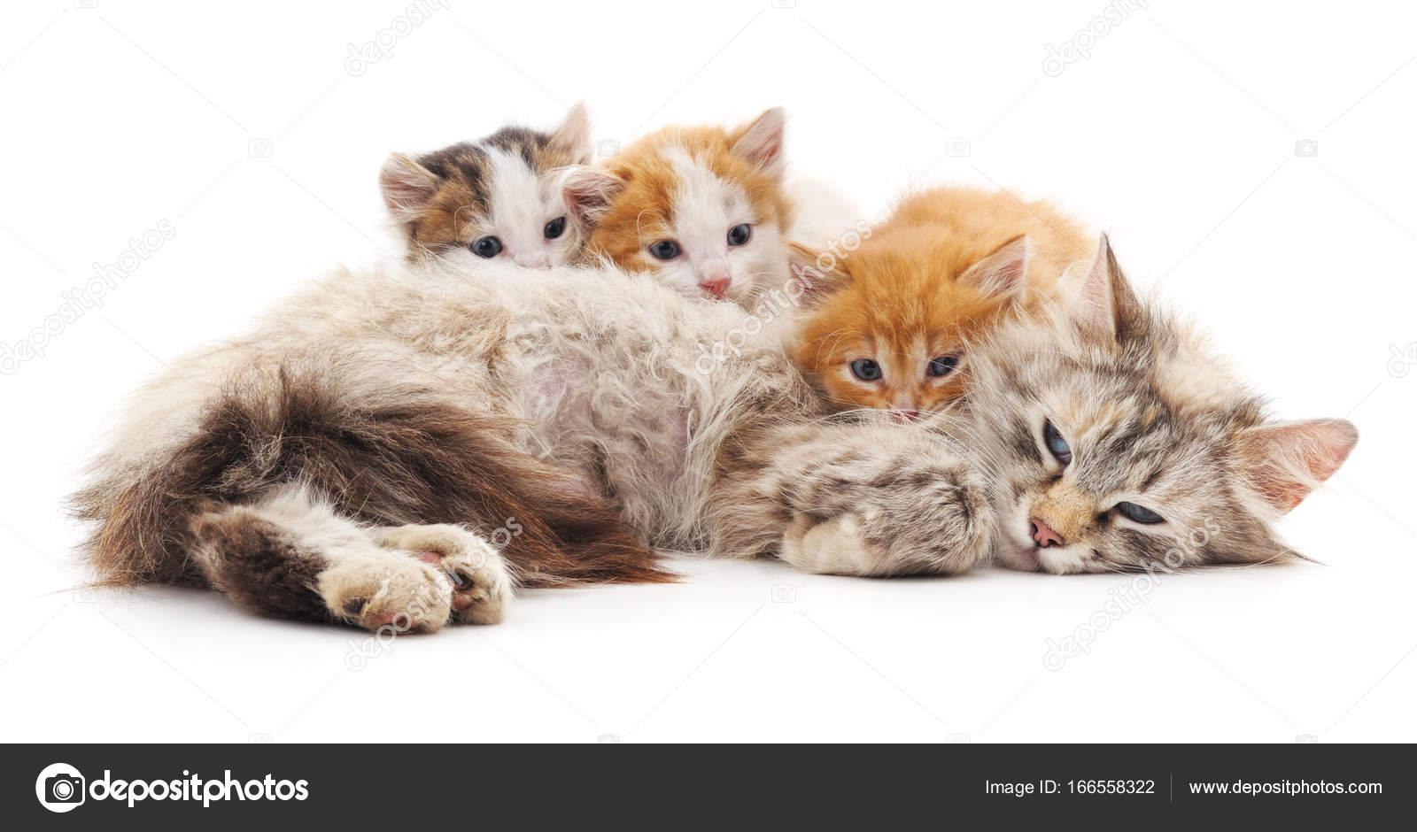 Кот с котятами . — Стоковое фото © Voren1 #166558322