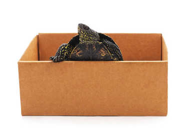 Turtle in the box.