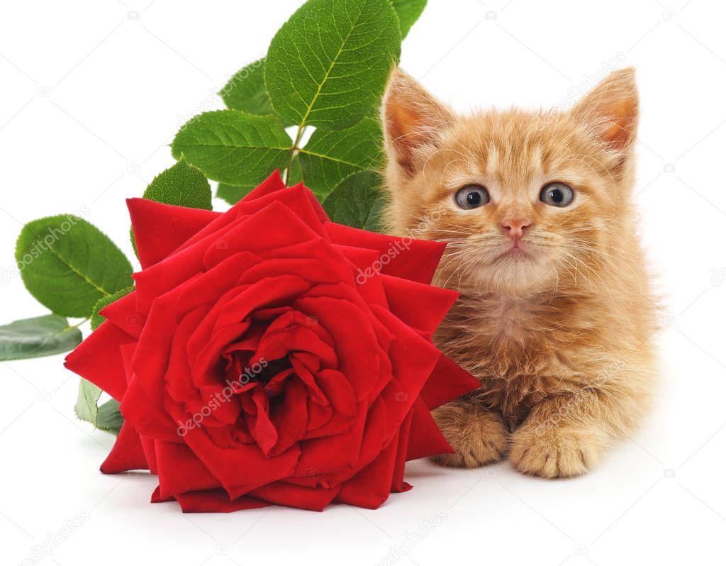 Kitten and rose.