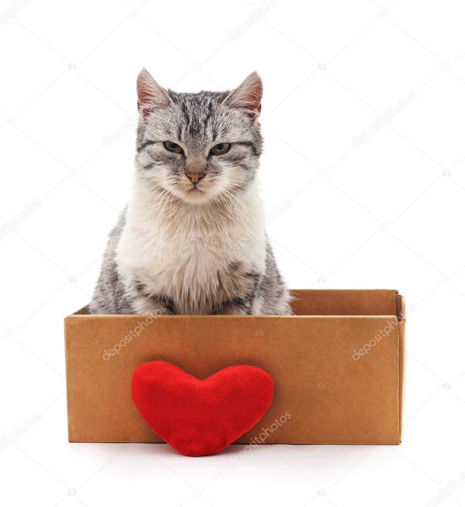 Kitten in a box with the heart.