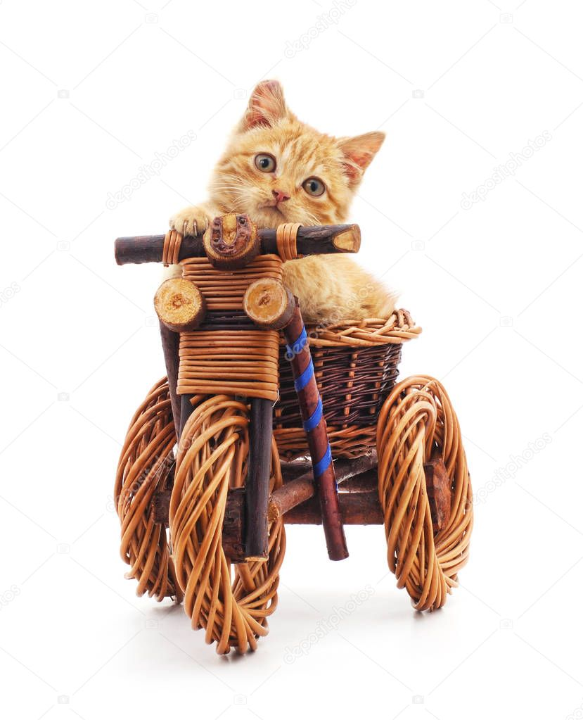 Red kitten on toy bike.