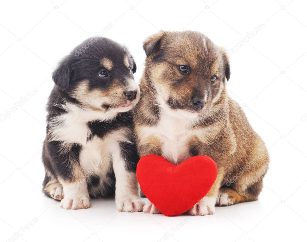 Two puppys with a toy heart.