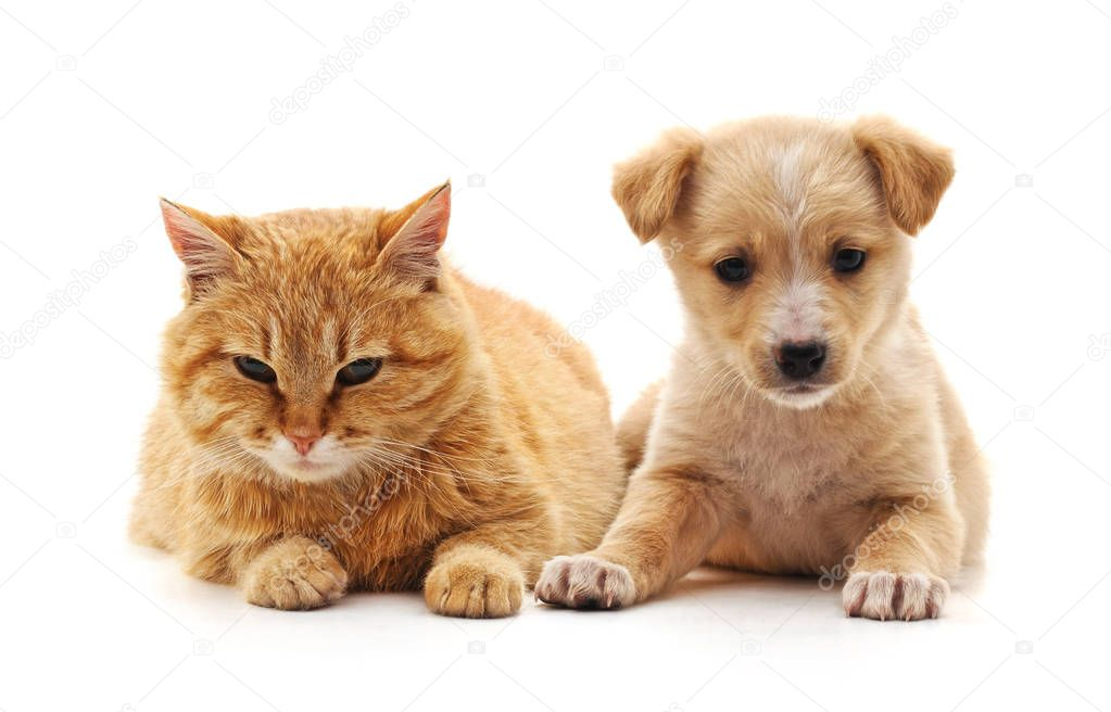 Puppy and cat.