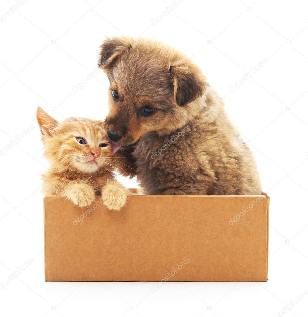 Kitten and puppy in a box.