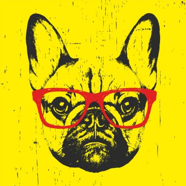 portrait of French Bulldog with glasses