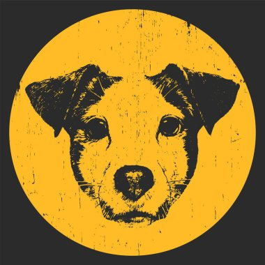 portrait of Jack Russell dog