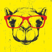 portrait of camel with glasses.
