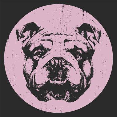 Portrait of English Bulldog.
