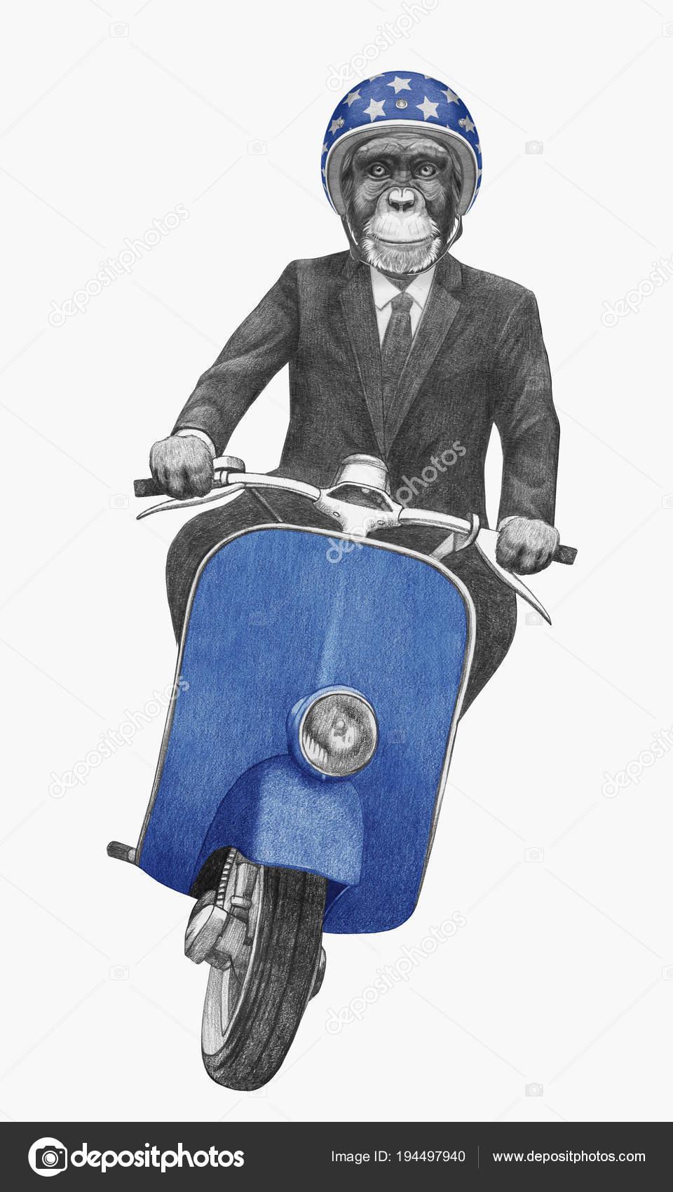 Il miglior posto classcic vera qualità Illustrazione Scimpanzé Antropomorfo Guida Vintage Motor ...