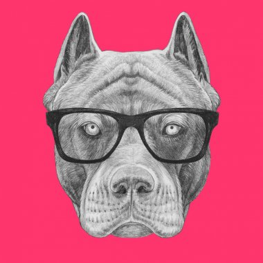 Funny sketch of pit bull portrait in hipster glasses on pink