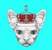 Fényképek Sphynx macska a kék korona szép vázlatot portréja