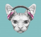 Fényképek Szép vázlatot portréja Sphynx macska-a fejhallgató kék