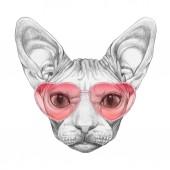 Fényképek Sphynx macska a szív alakú napszemüveg, elszigetelt fehér szép vázlatot portréja
