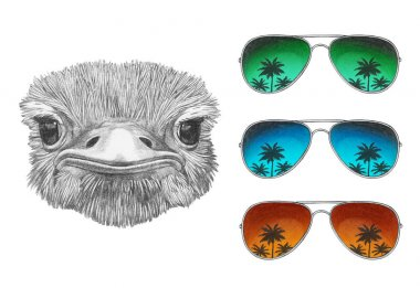 Funny sketch portrait of ostrich and set of three aviator sunglasses with reflection of palm trees, isolated on white