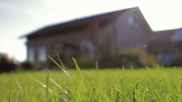 Sestřižený trávník sluncem kolem domu