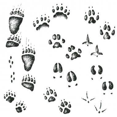 animal and bird tracks