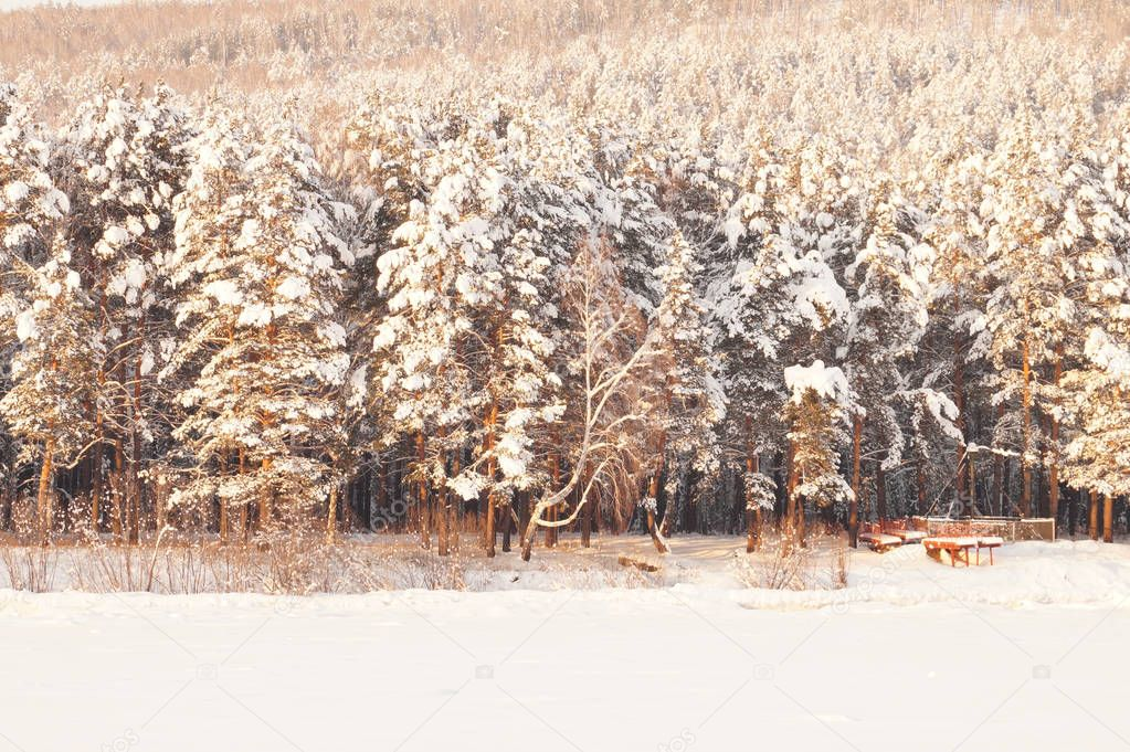 Beautiful snow-covered forest at sunset. Frosty winter day. Coniferous trees on the hills. Magical atmosphere