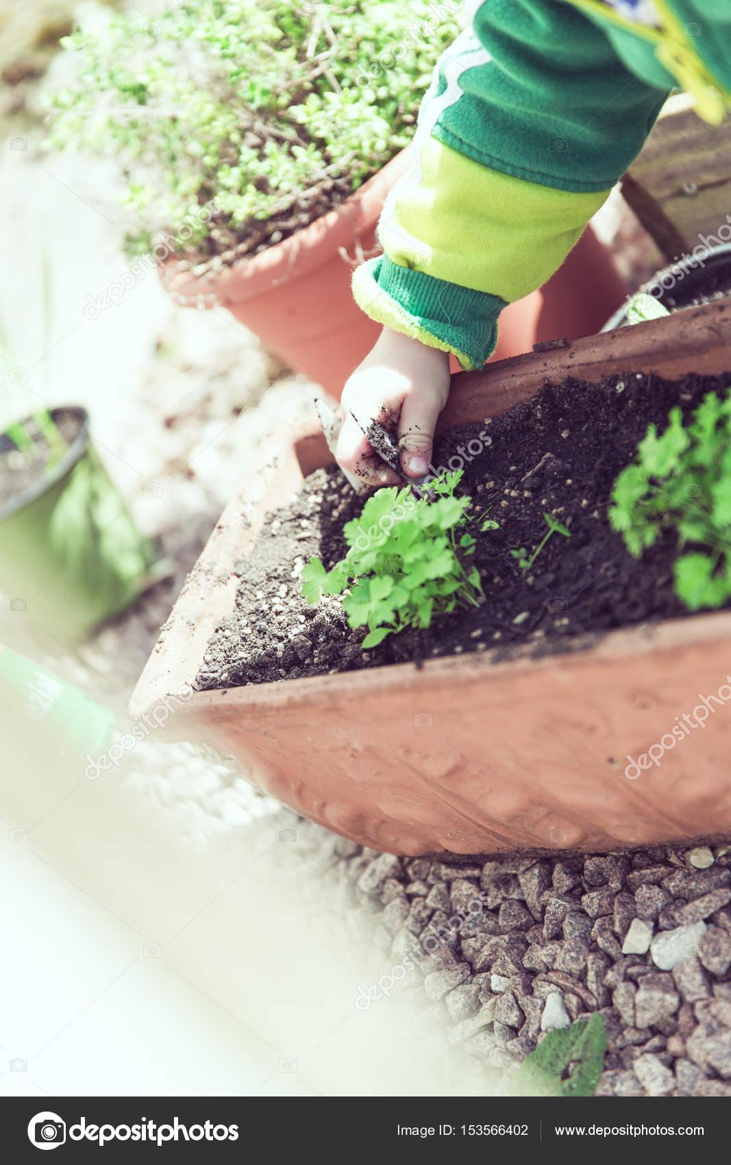 Fresh Bio Garden Herbs Stock Photo C Markusspiske 153566402