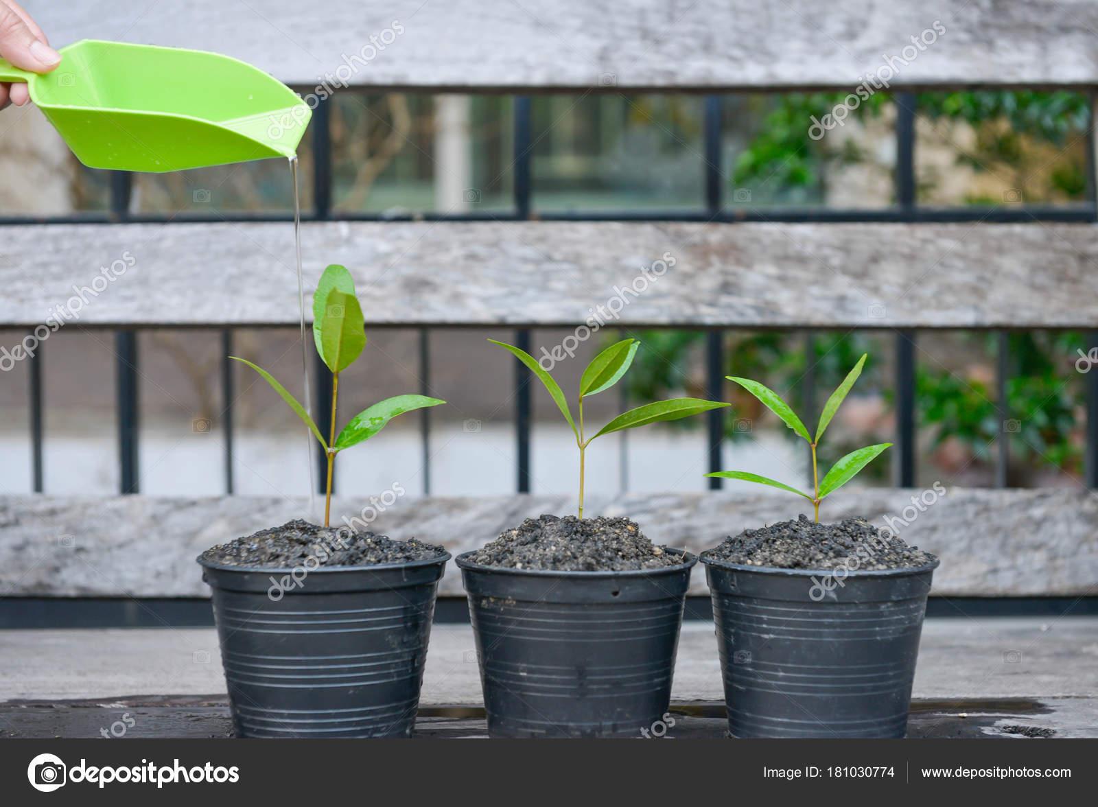 arrosage pour culture plantes dans les pots fleurs — photographie