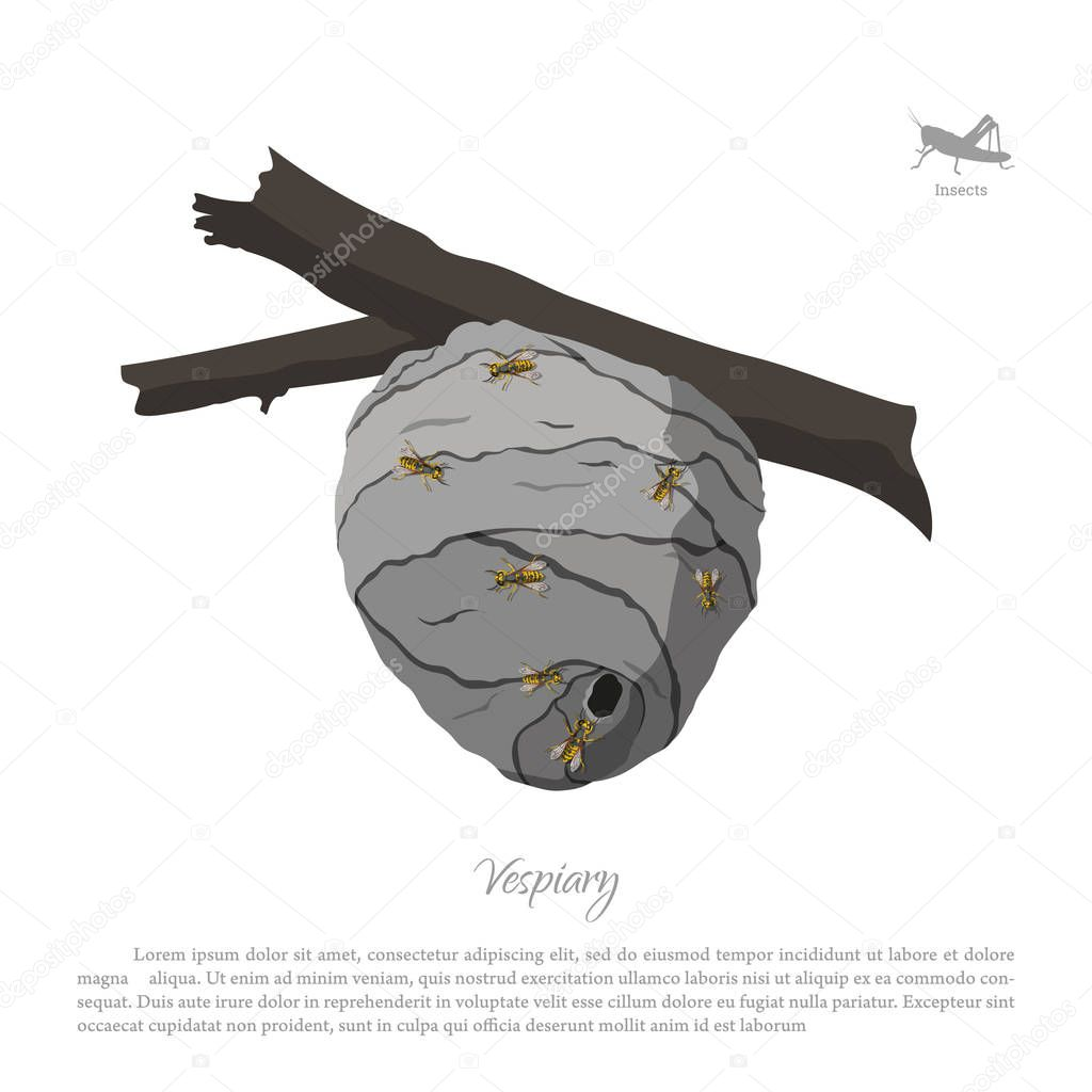 Vespiary drawing. Wasp hive on a branch. Residence flying insect