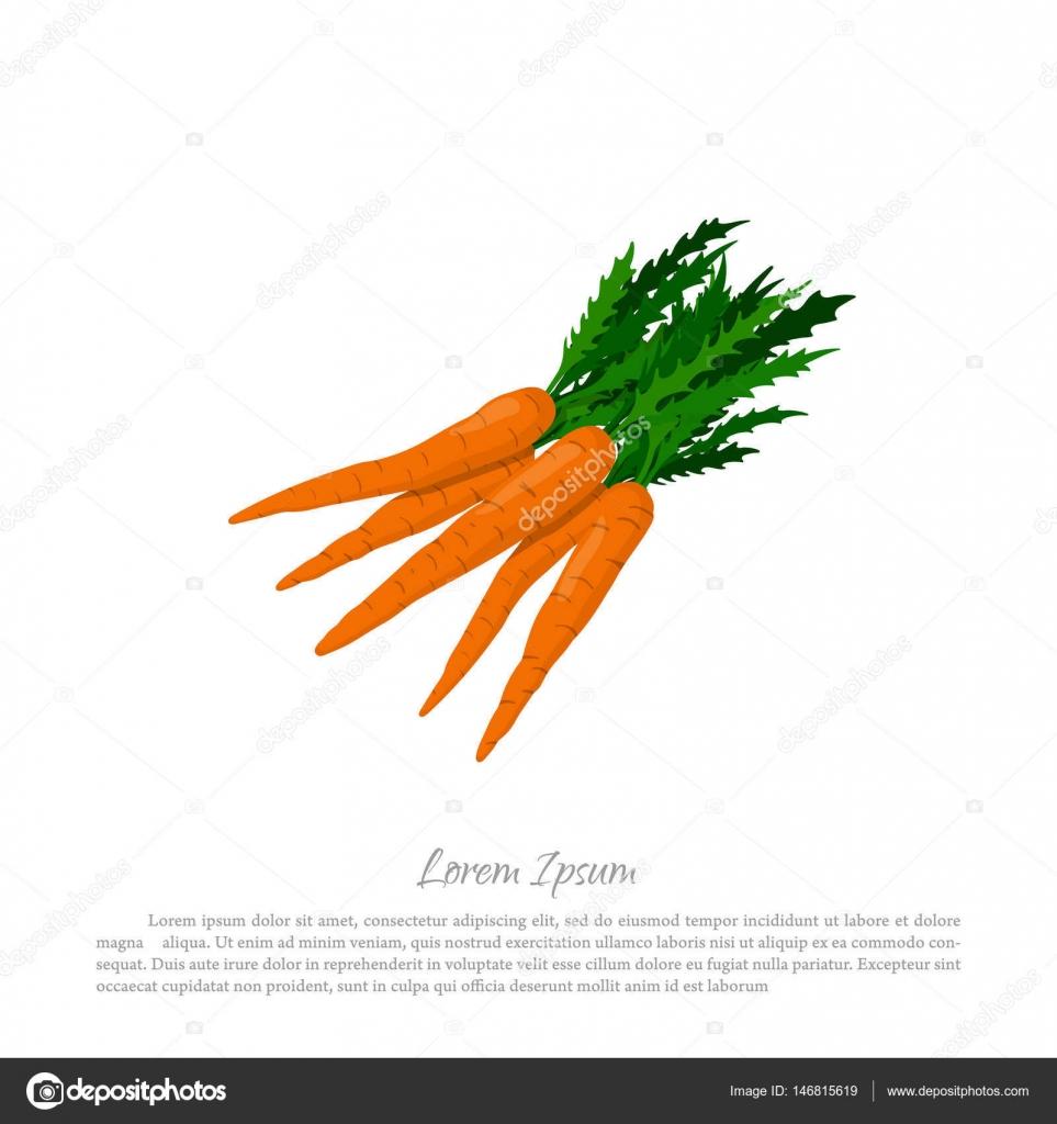 Hay Un Montón De Zanahorias Naranja Sobre Un Fondo Blanco Dibujo De