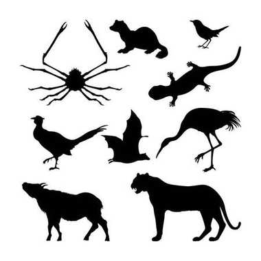 Set of silhouettes of Japanese animals. Black tiger, crane and pheasant on a white background