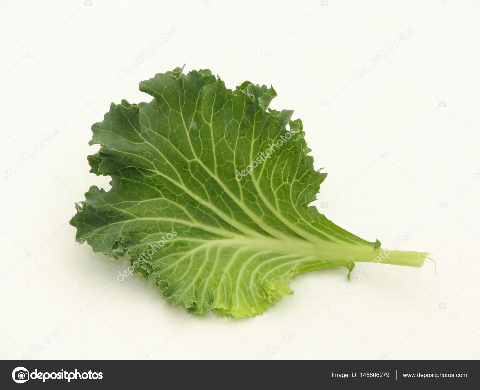 Salat Grün Isoliert Auf Weißem Hintergrund Stockfoto 4d 145806279
