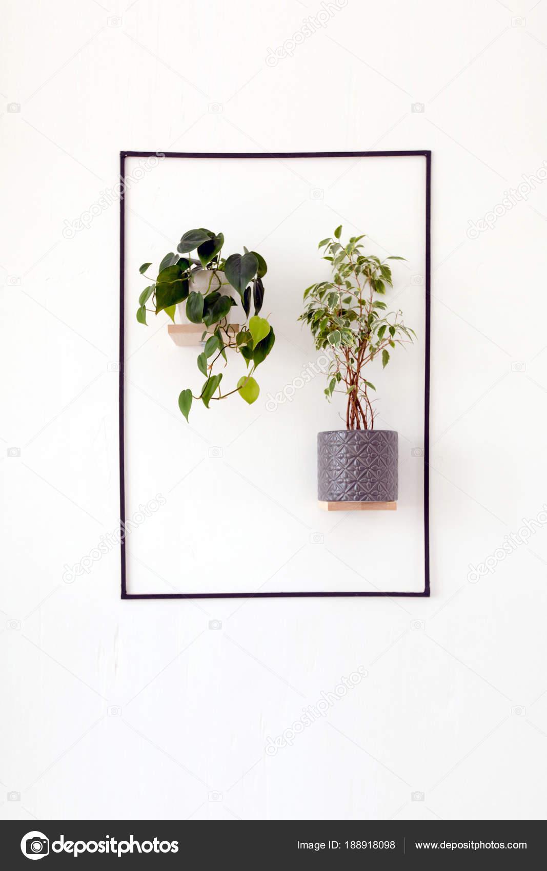 Białe ściany Z Wiszące Doniczki Zdjęcie Stockowe 371819