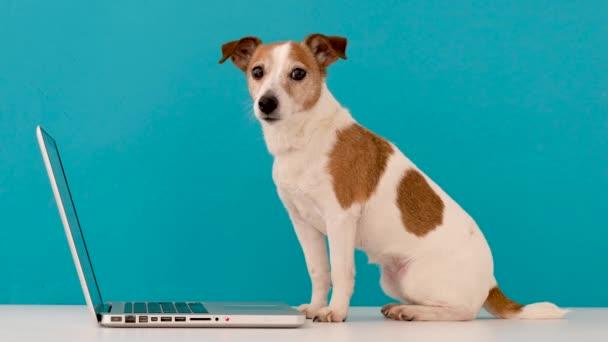 Kutya nézi laptop stúdióban
