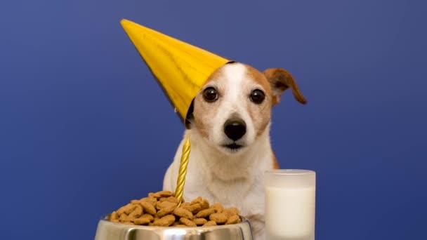 Cute dog during birthday celebration