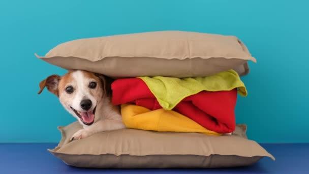 Polštářový burger s roztomilým psem