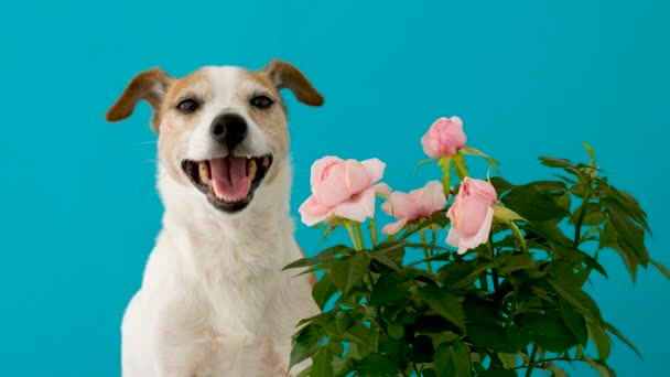Adorable dog with flowers on blue background