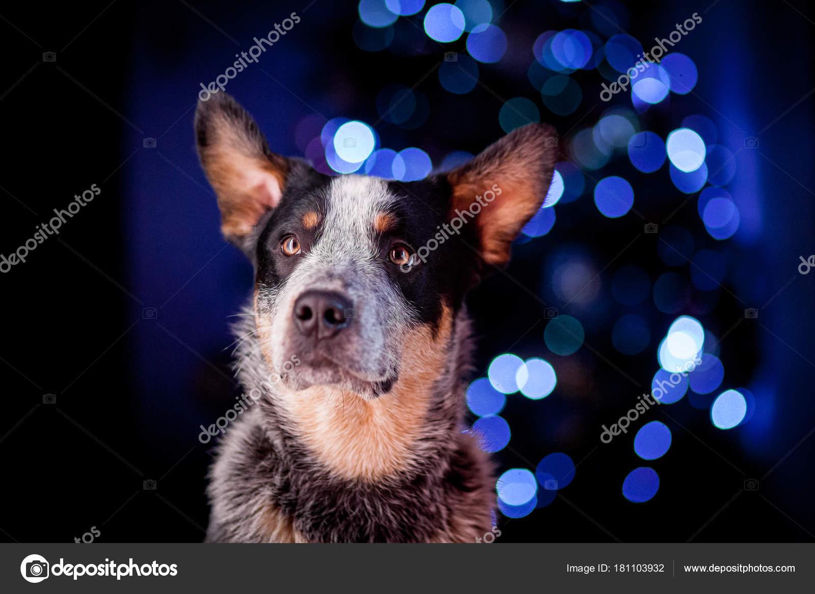 hond kerst verlichting stockfoto