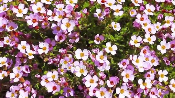 Přírodní pozadí mělké fialovými květy třesoucí se ve větru