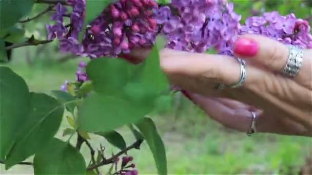 Ženská ruka dotkne fialovými květy detail