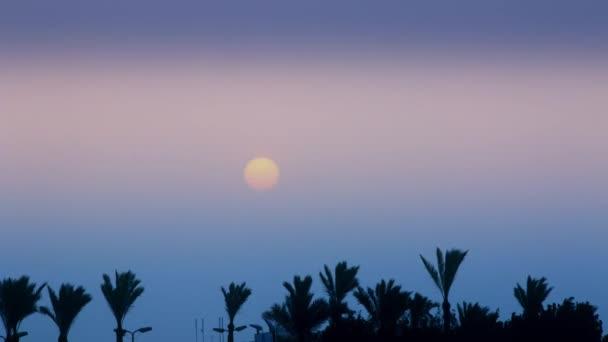 Krásný východ slunce nad palmy v exotické zemi