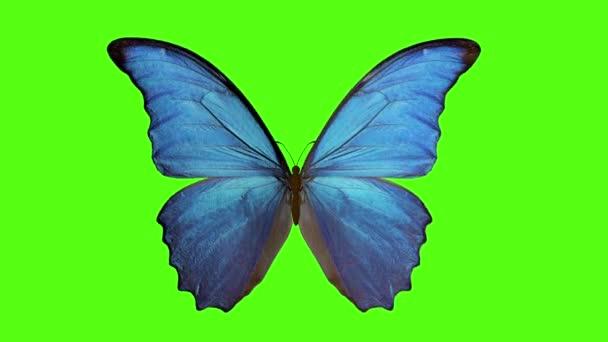 pillangó csapkodja a szárnyait. pillangó zöld háttérrel. 3 d tetemeltakarítás