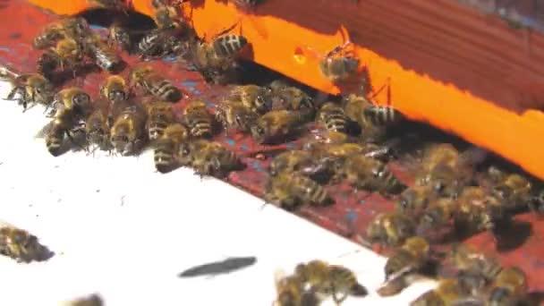 Včely létají z úlu