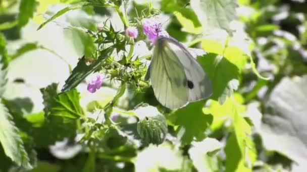 White butterflies at summer