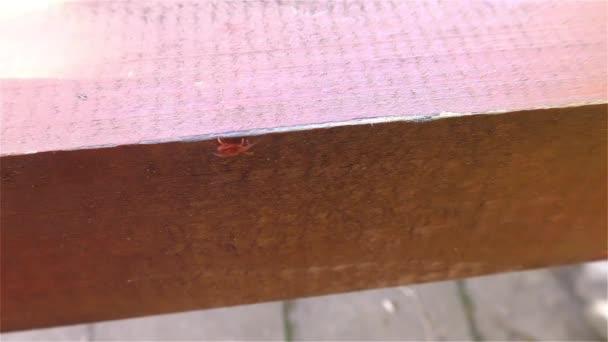 klíště - parazitní arachnid