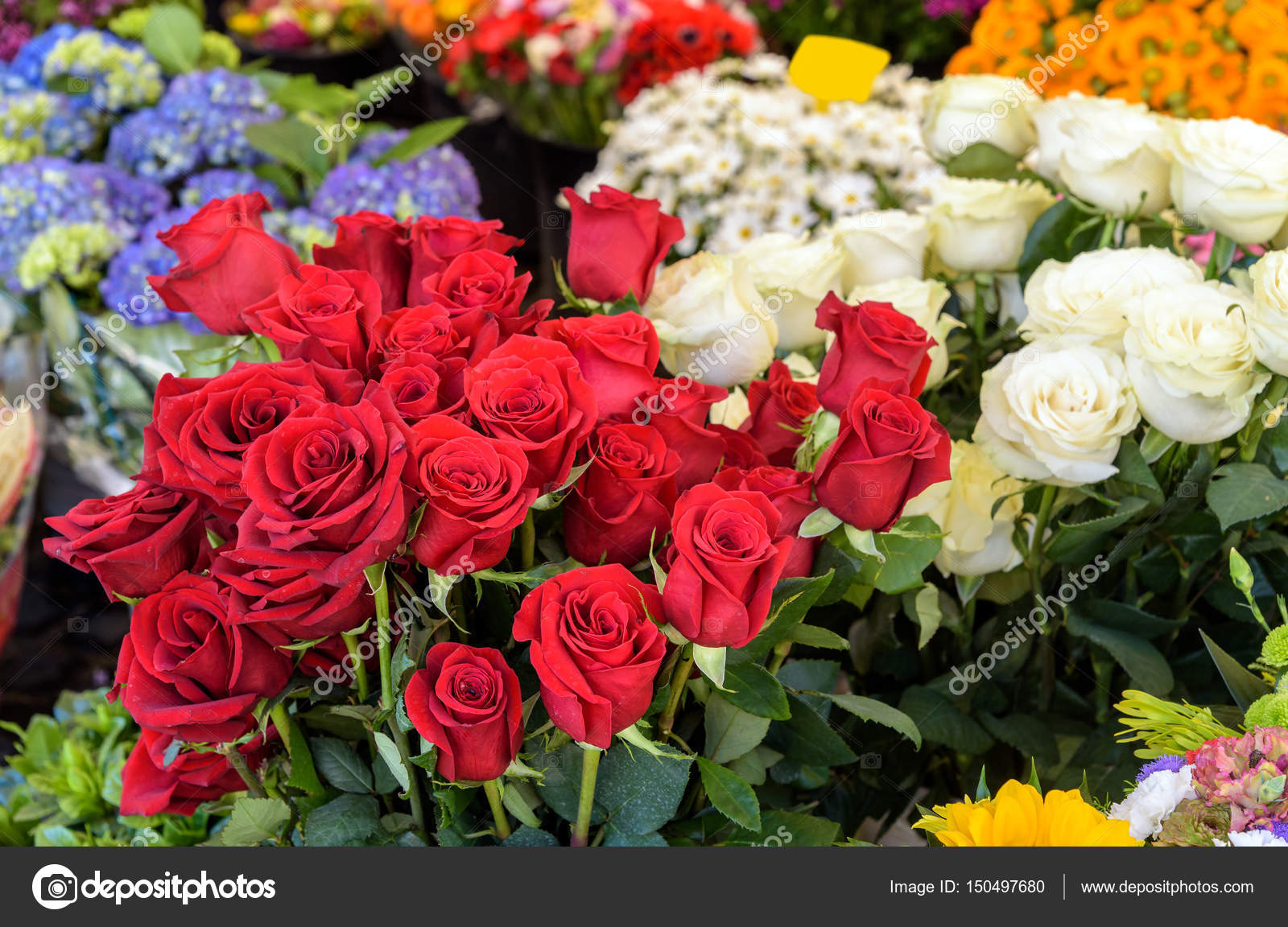 colorful flowers background — Stock Photo © Gio.Ca #150497680