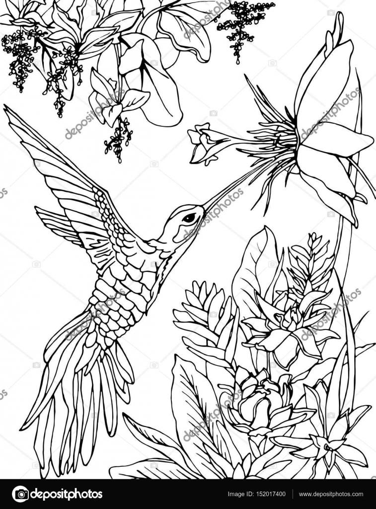 Imágenes: colibri para colorear | Colibrí volando bajo las flores y ...