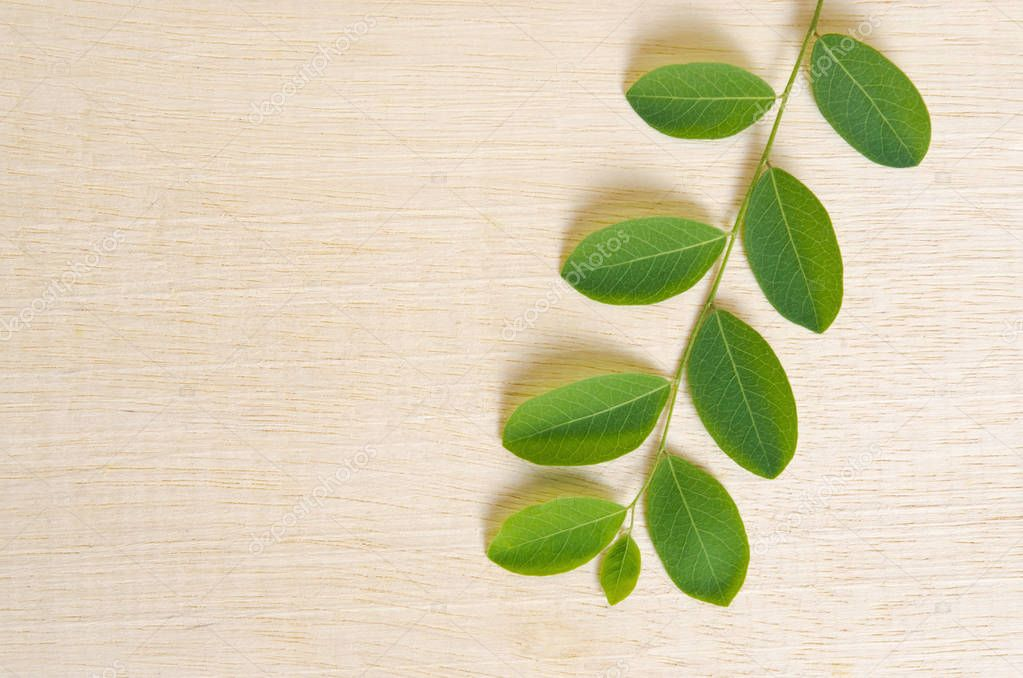 Moringa plant leaf isolated on wooden board background with blan