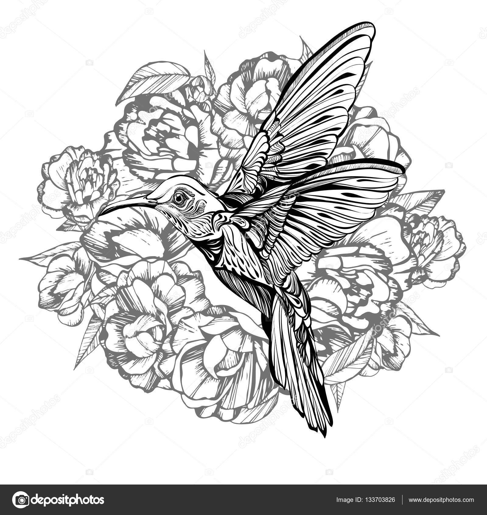 Beija-flor Em Voo. Desenho Detalhado De Uma Ilustração De