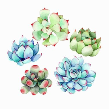 Succulents watercolor elements