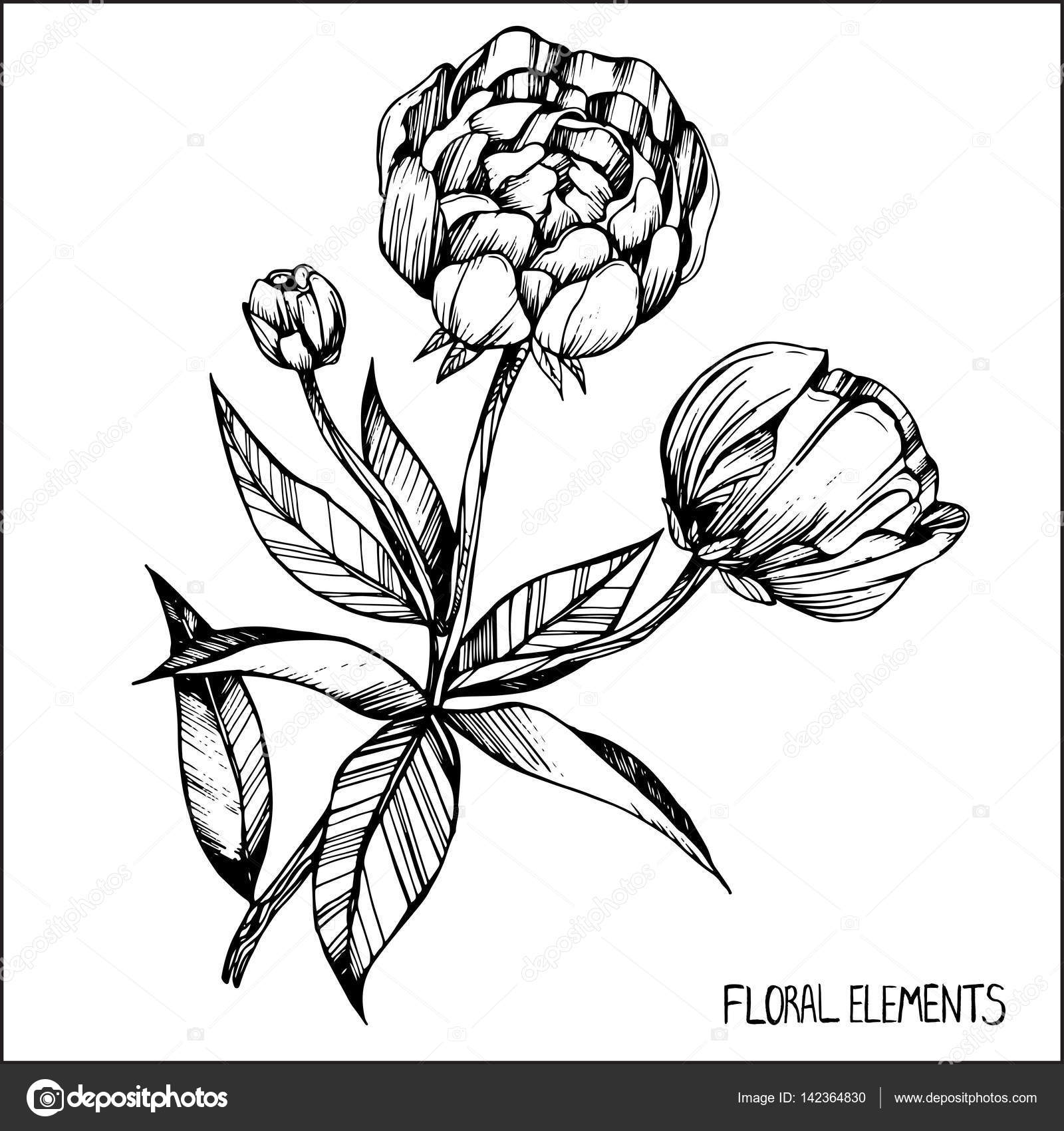 peony coloring books for children and adults ink pen capillary