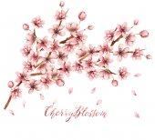 Photo Cherry blossom illustration